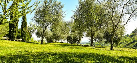 Bio Agriturismo Olistico Valle dei Calanchi. Il Parco e le stelle