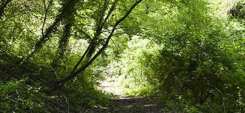 Bio Agriturismo Olistico Valle dei Calanchi. Il Sentiero degli Spazi Sacri