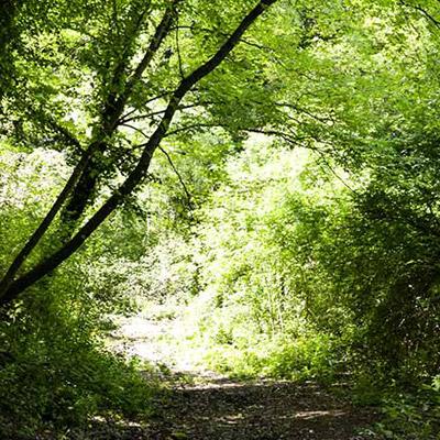 Valle dei Calanchi Bio Agriturismo olistico Il sentiero degli Spazi Sacri